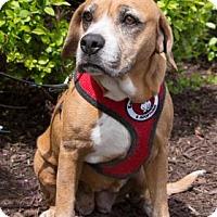 Adopt A Pet :: Carrie - Wichita, KS