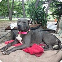 Adopt A Pet :: Jo-Jo - Allen, TX