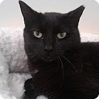 Adopt A Pet :: Una-$50 - Brimfield, MA