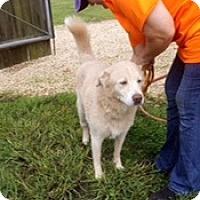 Adopt A Pet :: Tes - New Canaan, CT