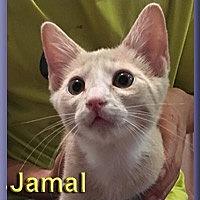 Adopt A Pet :: Jamal - Aldie, VA