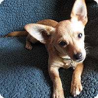 Adopt A Pet :: TROY - Raleigh, NC