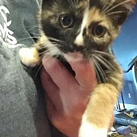 Adopt A Pet :: May - Hanna City, IL