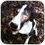 Photo 2 - Hound (Unknown Type) Mix Dog for adoption in Hamburg, Pennsylvania - BANJO