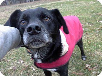 Labrador Retriever Mix Dog for adoption in Marietta, Georgia - Duke