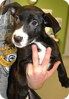 Terrier (Unknown Type, Medium) Mix Puppy for adoption in Scranton, Pennsylvania - Truffles (Reduced Adoption Fee