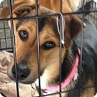 Adopt A Pet :: Eclair - Brattleboro, VT