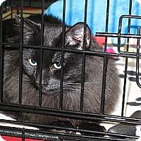 Adopt A Pet :: Dancer - Port Republic, MD