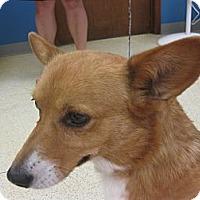 Adopt A Pet :: Sandy - Inola, OK