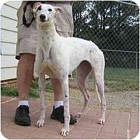 Adopt A Pet :: Favor - Oak Ridge, NC