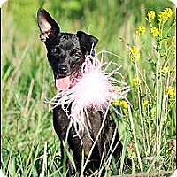 Adopt A Pet :: Zoe - Hilliard, OH