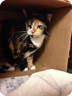 Domestic Mediumhair Cat for adoption in Balto, Maryland - Laura