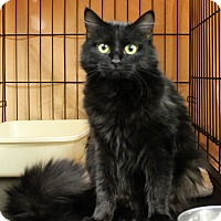 Adopt A Pet :: Hickory - Mission, BC
