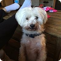 Adopt A Pet :: CJ - Hazard, KY