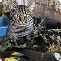 Adopt A Pet :: Hercules - Dallas, TX
