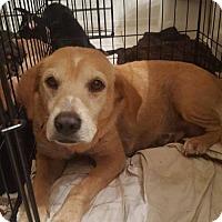 Adopt A Pet :: Tessa - ROSENBERG, TX