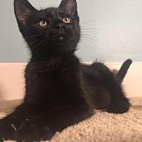 Adopt A Pet :: Luna - Savannah, GA