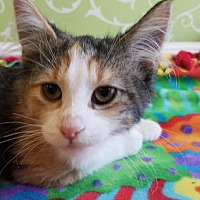 Adopt A Pet :: Effie Trinket - Red Wing, MN