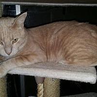 Adopt A Pet :: Meeko - Napa, CA