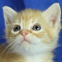 Adopt A Pet :: Sandy - Winston-Salem, NC