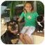 Photo 1 - Golden Retriever/German Shepherd Dog Mix Dog for adoption in El Cajon, California - Hobie