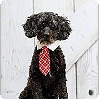 Adopt A Pet :: Coco - Hilliard, OH