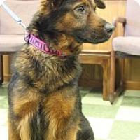 Adopt A Pet :: Joy - Dover, OH