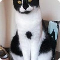 Adopt A Pet :: Brooks - Colorado Springs, CO