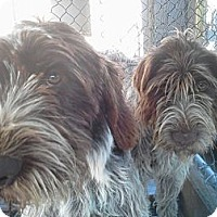 Adopt A Pet :: Luke - Santa Barbara, CA