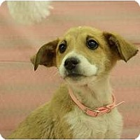 Adopt A Pet :: Aurora - Broomfield, CO