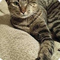 Adopt A Pet :: Poppy - Columbus, GA