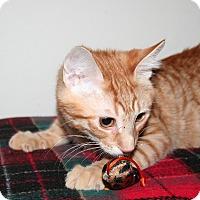 Adopt A Pet :: Sage - Santa Rosa, CA