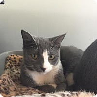 Adopt A Pet :: Rosalie - Hampton, VA
