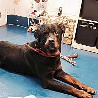 Adopt A Pet :: Mohican - New Kent, VA