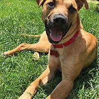 Adopt A Pet :: Kiwi - Northville, MI