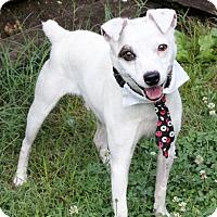 Adopt A Pet :: Coconut - Dalton, GA