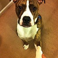 Adopt A Pet :: Flipside - Villa Park, IL