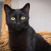 Adopt A Pet :: Macy - Corinne, UT