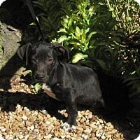 Adopt A Pet :: Webber - Providence, RI