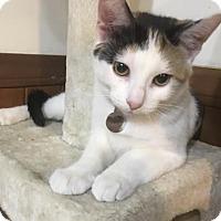 Adopt A Pet :: Skittles - Romeoville, IL