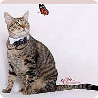Adopt A Pet :: BowTie - Orange, CA