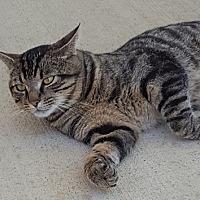 Adopt A Pet :: Jarvis - Alexandria, VA