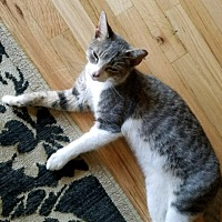 Adopt A Pet :: Smokey - Islip, NY
