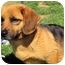 Photo 1 - Dachshund/Labrador Retriever Mix Dog for adoption in Mahwah, New Jersey - Gabriella