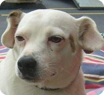 Jack Russell Terrier Mix Dog for adoption in Marion, North Carolina - Wishbone