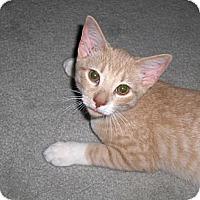 Adopt A Pet :: TY - Richmond, VA