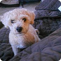 Adopt A Pet :: ABBY - Raleigh, NC
