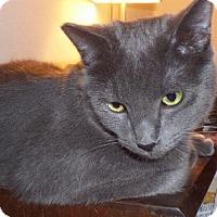 Adopt A Pet :: Smicky - Palo Alto, CA