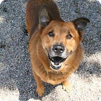 Shepherd (Unknown Type) Mix Dog for adoption in Norfolk, Virginia - Theodore