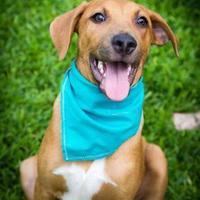 Adopt A Pet :: Benson - Von Ormy, TX